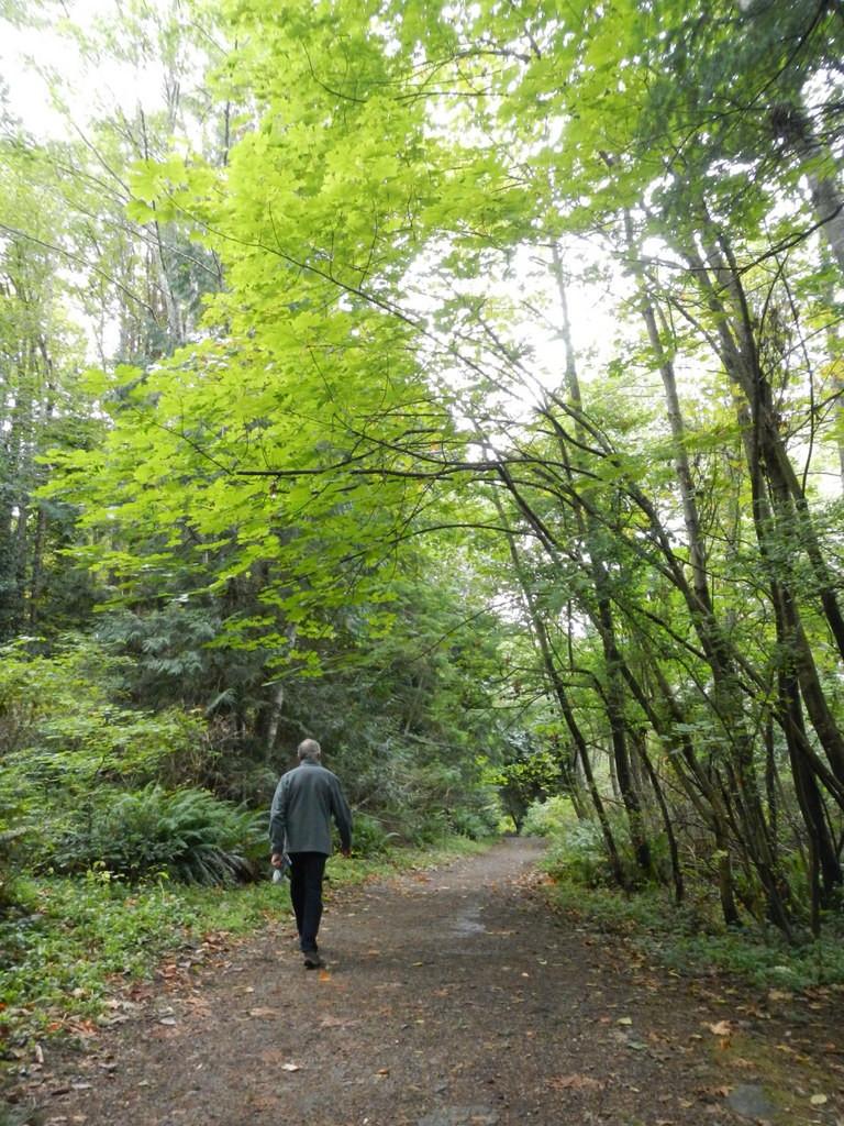 Forest walks around Bowen Island