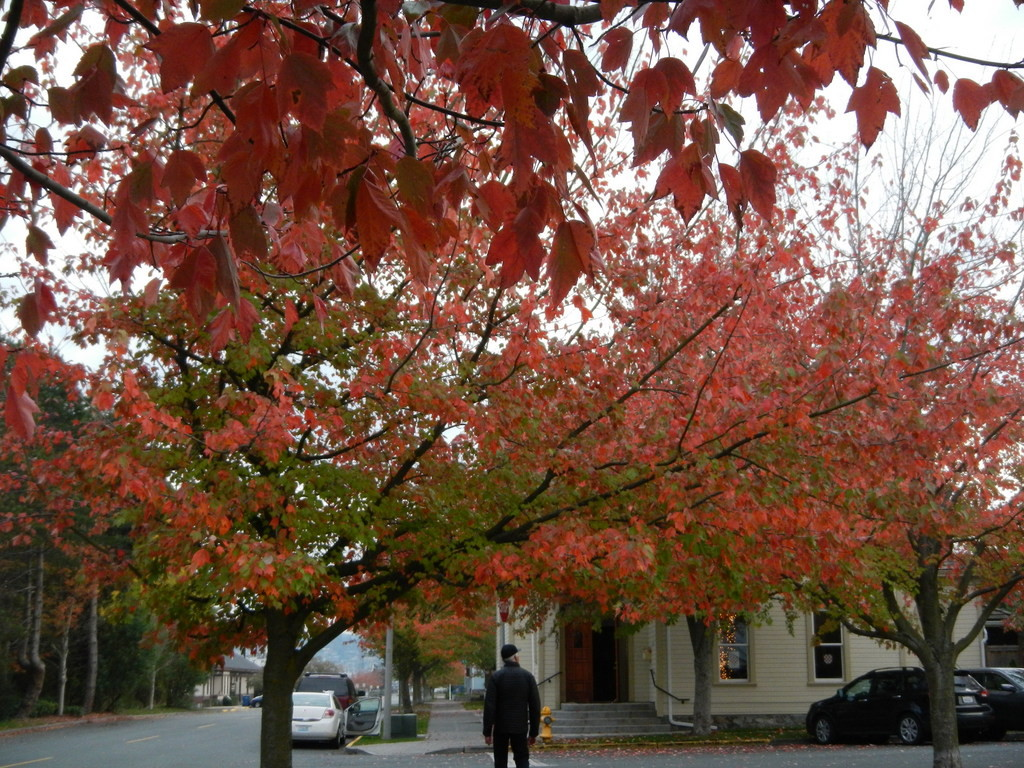 Fall ...beautiful fall