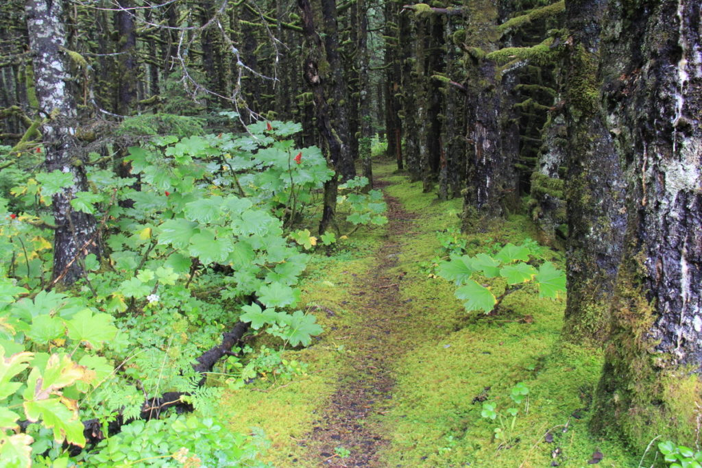 Beautiful forests around Canon Bay