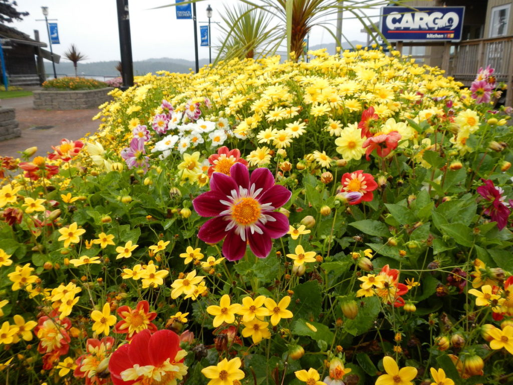 Last of the spring flowers still to be enjoyed in Prince Rupert
